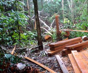 La deforestación afectaría más