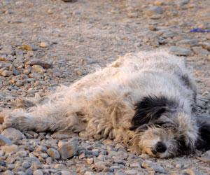 Idiosincrasia de la gente impide esterilizar a mascotas