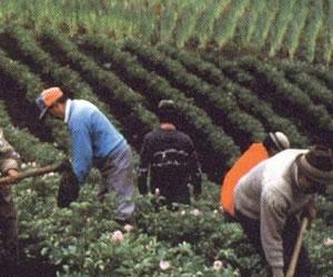 Censo agropecuario servirá para plantear políticas de seguridad alimentaría