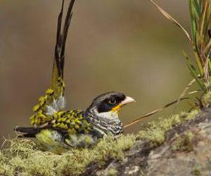 La bella biodiversidad del noroeste de Bolivia en una muestra