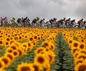 El pelotón de ciclistas en acción durante la decimonovena etapa del Tour de Francia. Foto: EFE