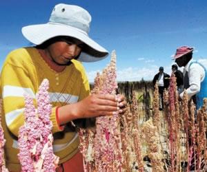La Agricultura Familiar garantizará la seguridad alimentaria con tecnología