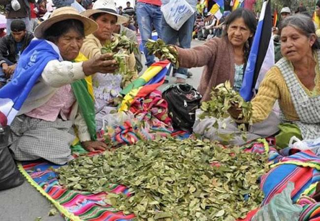 Coca cultivo tradicional en Bolivia. Foto: ABI