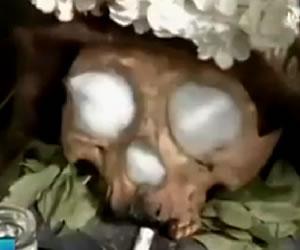 En vídeo: Culto a cráneos humanos, los llamados 'Ñatitas'