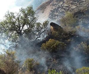 Incendio destruye 115 hectáreas del Parque Nacional Tunari