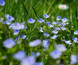 Bolivia produce más de 3.000 especies de plantas medicinales