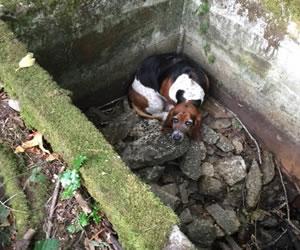 Los perros son fieles hasta entre ellos mismos