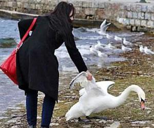 La selfie que mató a un cisne en manos de una turista búlgara
