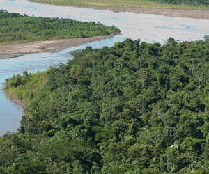 Según experto, bosques en manos de indígenas combaten mejor el cambio climático