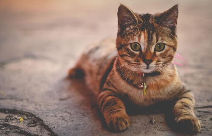 YouTube: Nueve datos curiosos sobre los gatos que debes saber