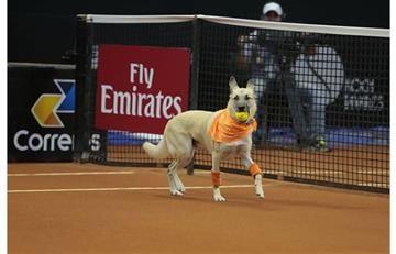 Así son los perros 'alcanzapelotas' que estarán en el Abierto de Brasil