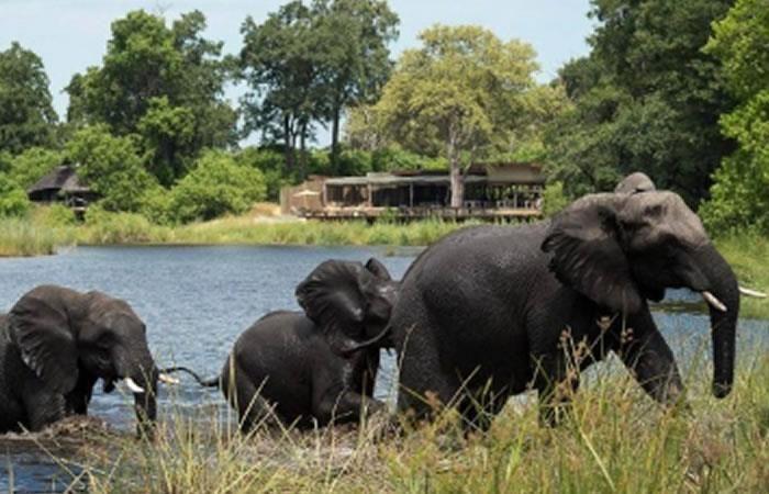 Elefante africano: El mamífero que menos duerme