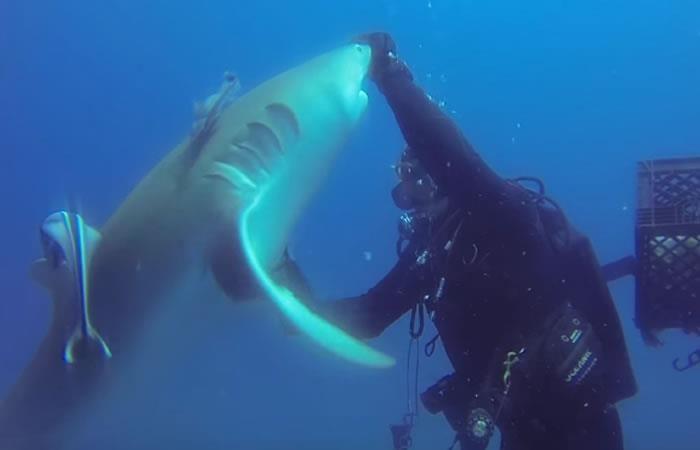 YouTube: Tiburón pide ayuda a un buzo