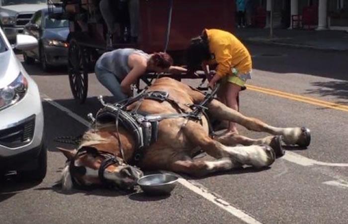 Facebook: Caballo se desploma al llevar un carruaje lleno de turistas