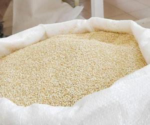 Sube en 10% producción de quinua y supera las 82 mil toneladas