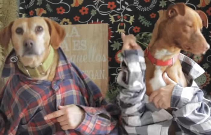 YouTube: 'Tu perrito', la versión de 'Despacito' que promueve la adopción