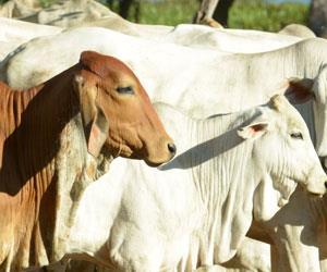Productores forestales migran a la ganadería por crisis en el sector