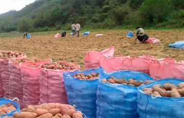 Desarrollo rural: Bolivia duplicó áreas de cultivos en 11 años