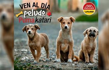 La Paz: Realizan feria de adopción de perros