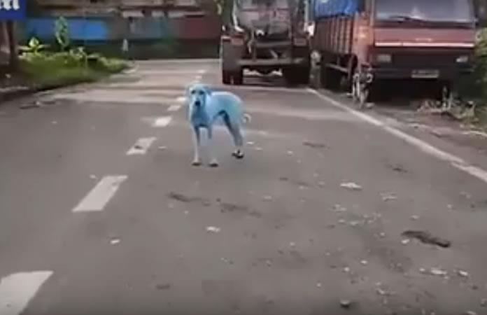 Video: Perros de la India cambian de color