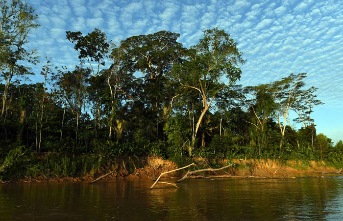 Reserva natural en el TIPNIS. Foto: ABI/Archivo