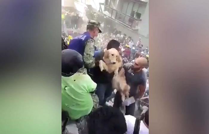 México: Emocionante rescate de un perro tras el terremoto