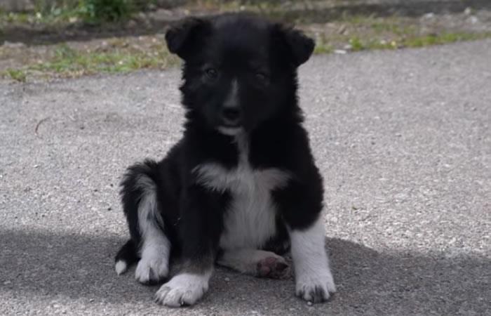 YouTube: Los perros de Chernóbil, víctimas invisibles de la tragedia