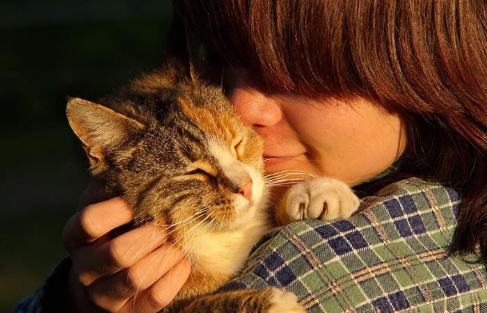 Si tu gato te araña podrías terminar con disfunción eréctil