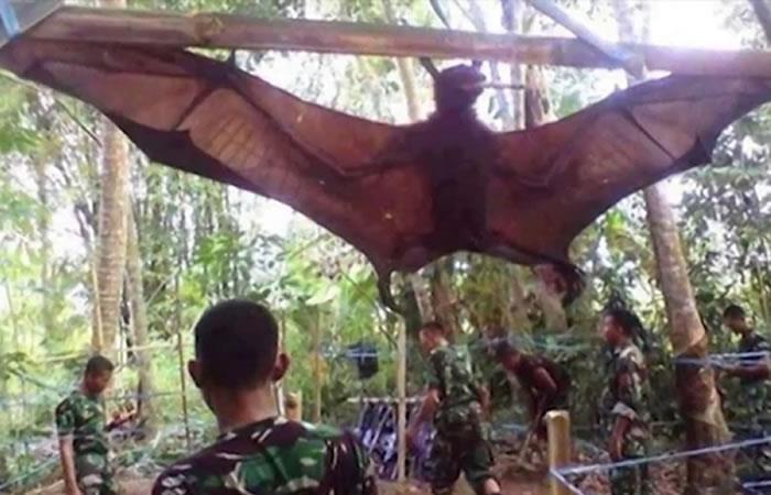 En Filipinas capturan impresionante murciélago gigante de 2 metros