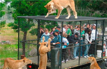 Impresionante zoológico donde los humanos son encerrados
