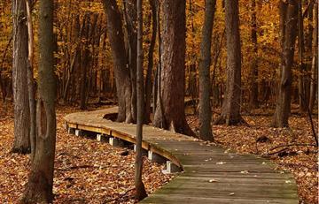 El parque Nacional Tunari será sometido a una campaña de reforestación