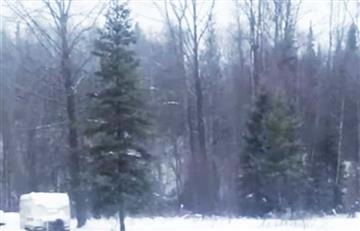El escalofriante sonido en las profundidades de un bosque en Canadá