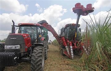 Bolivia exportará un millón de quintales de azúcar y 60.000 toneladas de soya