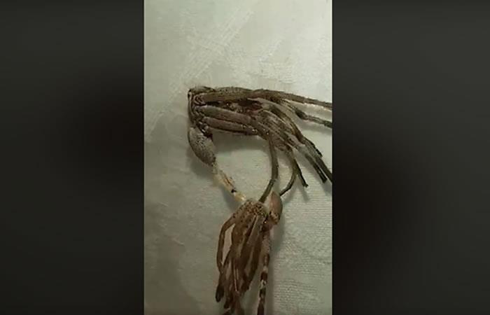 VIDEO: Registran extraña criatura de aspecto alienígena