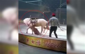 Video: El impactante ataque de un tigre y una leona a un caballo en un circo