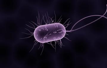 Alertan por peligrosa bacteria de transmisión sexual resistente a antibióticos