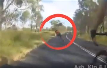 A este canguro definitivamente no le gustan los ciclistas