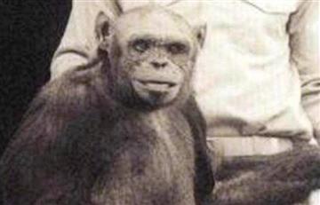 Híbrido humano y chimpancé nació en un laboratorio de EE.UU.