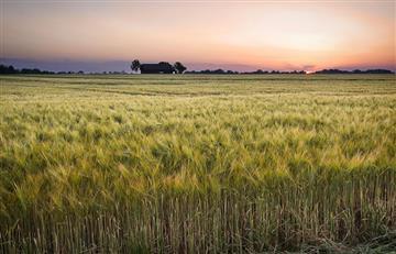 Bolivia se convirtió en exportador neto de cereales con $us 1.028 millones