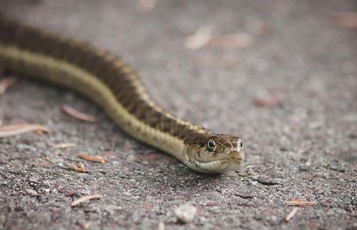 En La Paz hallan una extraña serpiente en El Prado