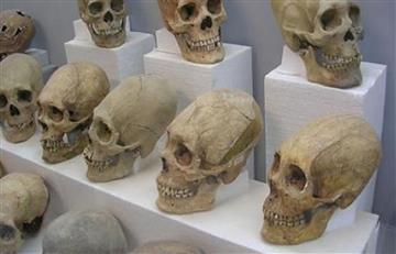 Reconstruyen cráneos milenarios aborígenes de Tiwanaku