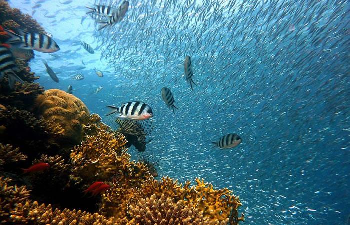 ¿Una ola de calor marinatransformó la Gran Barrera de Coral?