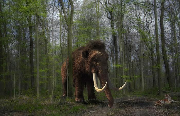 ¿Científicos planean clonar mamuts?