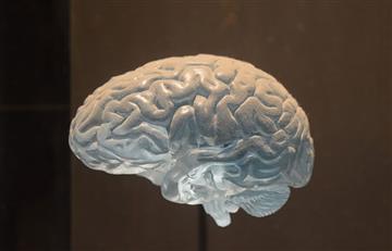 Científicos logran mantener vivos cerebros de cerdos fuera del cuerpo