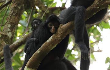 Expedición confirma que la mayor biodiversidad del mundo está en Bolivia