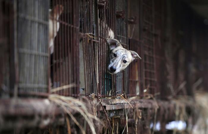 Corea del Sur: Un fallo judicial prohíbe matar perros para comer su carne