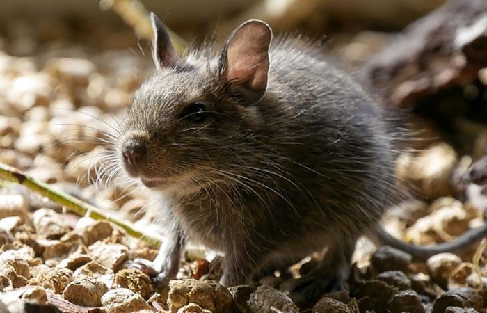 Los roedores ingresaron por un agujero del cajero. Foto: Pixabay