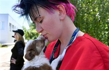 Perros de Chernóbil se preparan para tener una nueva vida