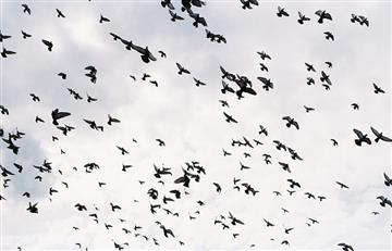 China controlará a los ciudadanos con 'Aves espías'