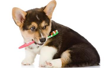 Consejos para cuidar la salud dental de su mascota